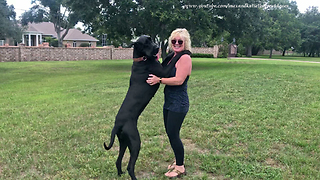 Happy Great Dane Loves to Dance With Her Mom  - Video