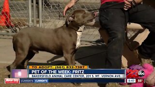 Pet of the Week: Fritz