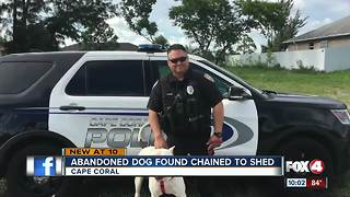 Abandoned dog found chained to shed