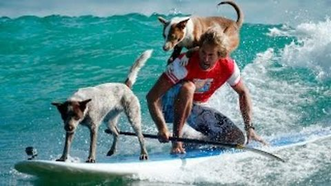 Rescue Dogs Flaunt Their Surfing Skills On The Paddle Board