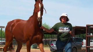 Arizona serves as home to retired race horses