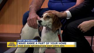 Pet of the week: Annie is super sweet 2-year-old Treeing Walker Coonhound needing a home