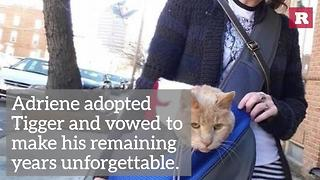 Tigger The Cat's Second Chance | Rare Animals - Video