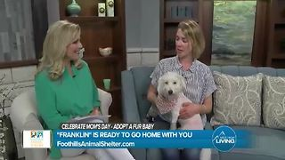 Foothills Animal Shelter - Video