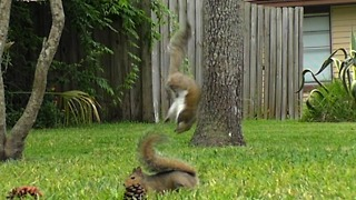 Squirrel Party ** - Video