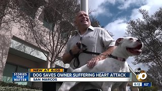 Dog saves owner suffering 'widow-maker' heart attack