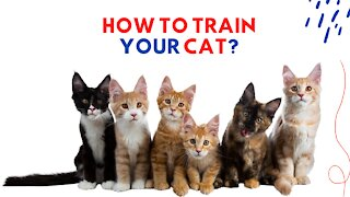 How to Train Your Cat?