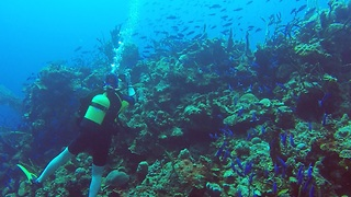 Diver surrounded by river of beautiful blue fish