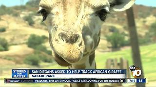 San Diegans asked to help track African giraffe - Video