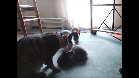 Adorable Bunnies Groomed By Cat