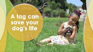A tag can save your dog's life - Video