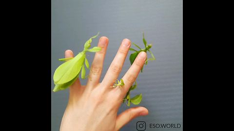 These Insects Look Exactly Like Leaves And Flowers