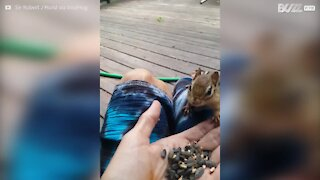 Dog feeds peanuts to little squirrel in Canada