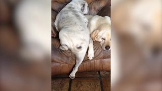 Funny Dogs Take A Nap Together - Video