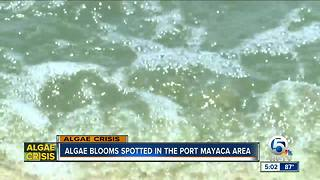 Report: Algae blooms now forming in Port Mayaca area - Video