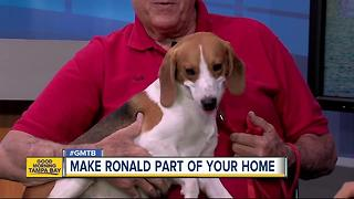 Rescue in Action: Ronald, our July 9 superstar - Video