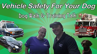 Vehicle safety tips for your dog - Video