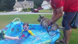 Puppy Thinks It's Swimming, Kicks Legs Furiously in Midair - Video