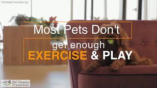 National Pet Obesity Survey 2016 - Video