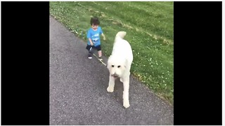 Dedicated 1-year-old boy preciously walks his doggy