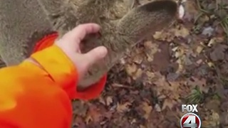 Young buck goes viral - Video