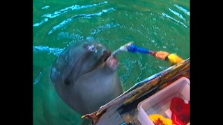 Dolphin Painter - Video