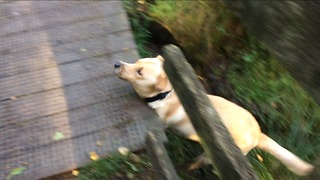 Dog misjudges jump and falls in mud - Video