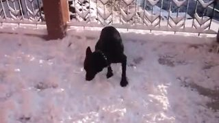 Dog goes absolutely nuts after discovering snow for first time! - Video