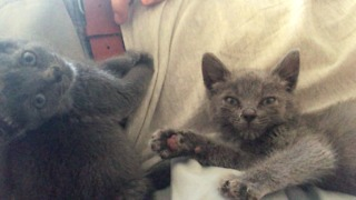 Kitten Cries When Human Stops Petting It - Video
