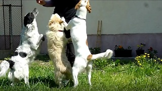 Homeless Dogs Happy And Jumping For Joy After Being Rescued