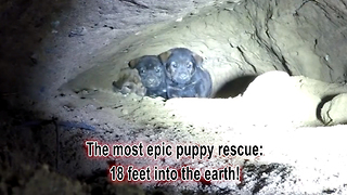 Animal Rescuers Climb 18 Feet Down A Cave To Rescue A Litter Of Puppies - Video