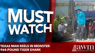 Texas man reels in monster 964-pound tiger shark - Video