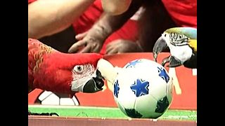 Parrot World Cup - Video