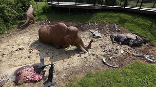Wild Cincy: Big Bone Lick Historic Site - Video