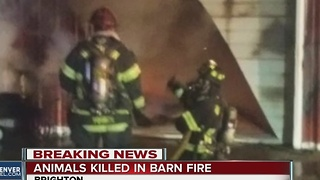 Horses killed in barn fire - Video