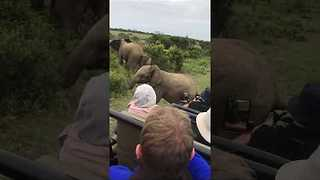 Adorable Baby Elephant Slips During Safari