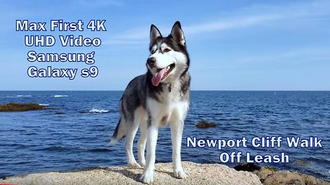 Siberian Husky Enjoys Off Leash Walk at Cliff Walk - 4K UHD By Samsung Galaxy S9 Open Box Testing