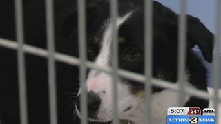 Board approves merger between Pottawatamie County Animal Shelter and Midlands Humane Society - Video