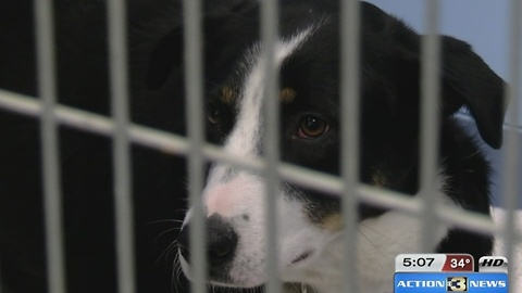 Board approves merger between Pottawatamie County Animal Shelter and Midlands Humane Society