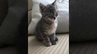 Adorable Kitten Struggles To Stay Awake