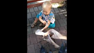 My two-year son caught a pigeon - Video