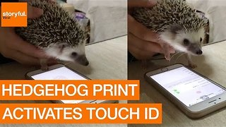 Hedgehog Successfully Tests iPhone Touch ID - Video