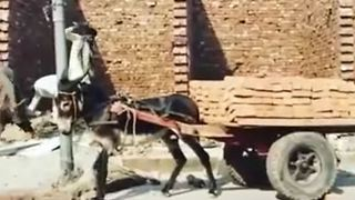 How To Unload Bricks From Donkey Cart Quickly - Video