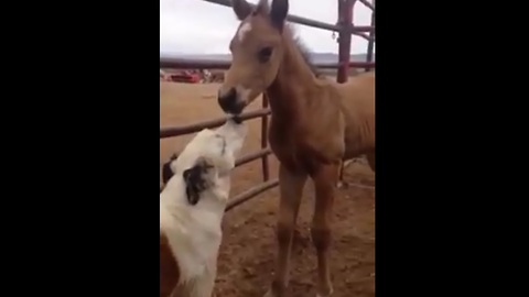 Sweet Pupper Is Busy Making Friends With Baby Horse