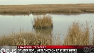 Saving tidal wetlands on the Eastern Shore - Video