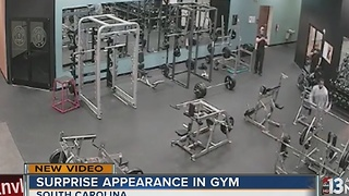 Deer makes appearance at gym - Video