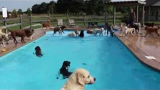 These Dogs Beat the Late Summer Heat With a Swim - Video