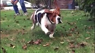 Adorable Droopy Dogs - Video