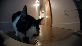 Do cats miss us when we leave? - Video