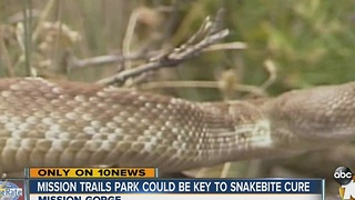 Mission Trails Park could be key to snakebite cure - Video